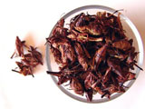 Yummy grasshoppers