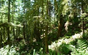 Ah les forêts du nord-ouest, ça va manquer